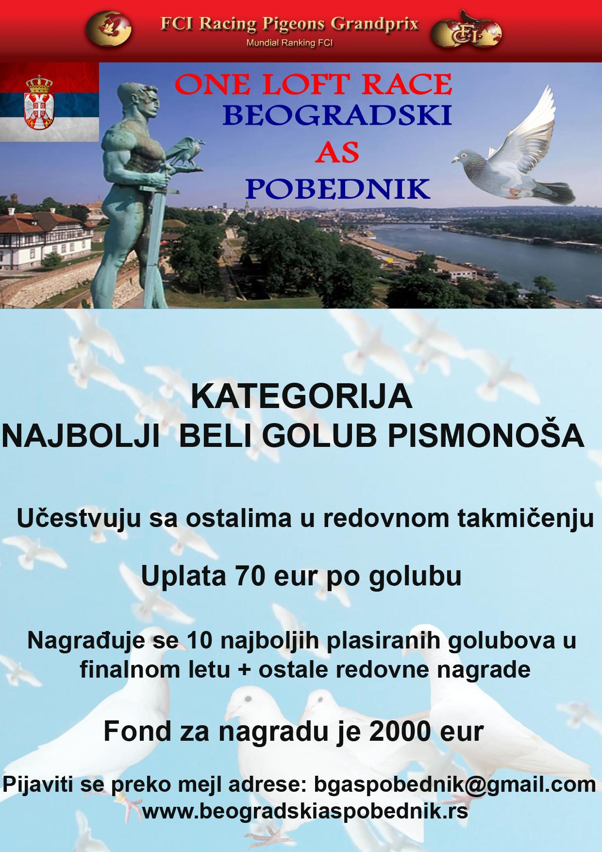 Beli_golub_2021